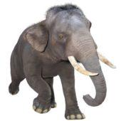 ケニア政府、105トンの象牙を焼却へ
