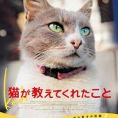 トルコ映画「猫が教えてくれたこと」観てね‼‼‼