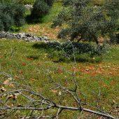 アジュルーン保護区の「絵のような風景」