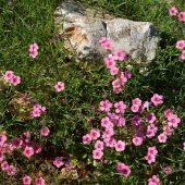 春のアジュルーン保護区は野草の天国