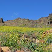 春のダーナ保護区は夢のお花畑