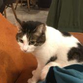 愛情をたっぷり受けている猫はツレナイ…のかニャ?
