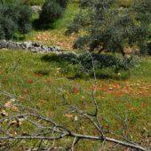 牧歌的で可愛らしいアジュルン保護区 (ヨルダン)